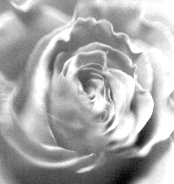 012-rosalouca-web